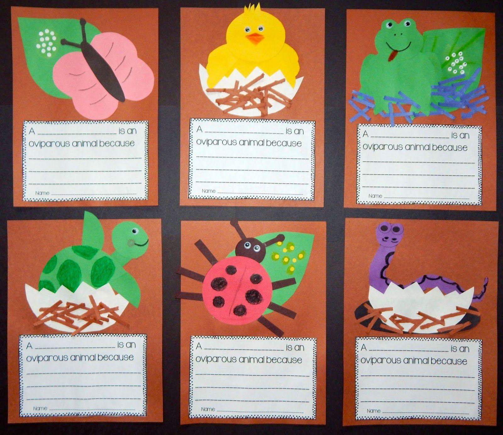 Oviparous Animal Crafts And Writing Display