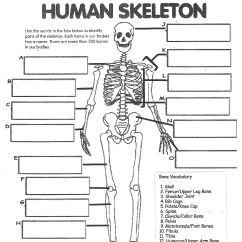 Facial Bones Diagram Not Labeled 4 Way Round Trailer Plug Wiring Digestive System Labeling Worksheet Answers Human Skeleton