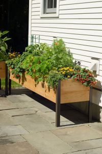 Amazon.com : 2' x 8' Elevated Cedar Planter Box : Raised ...