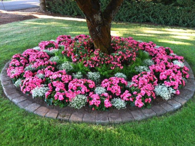 Stunning Begonia Bed Garden Ideas Pinterest Landscaping