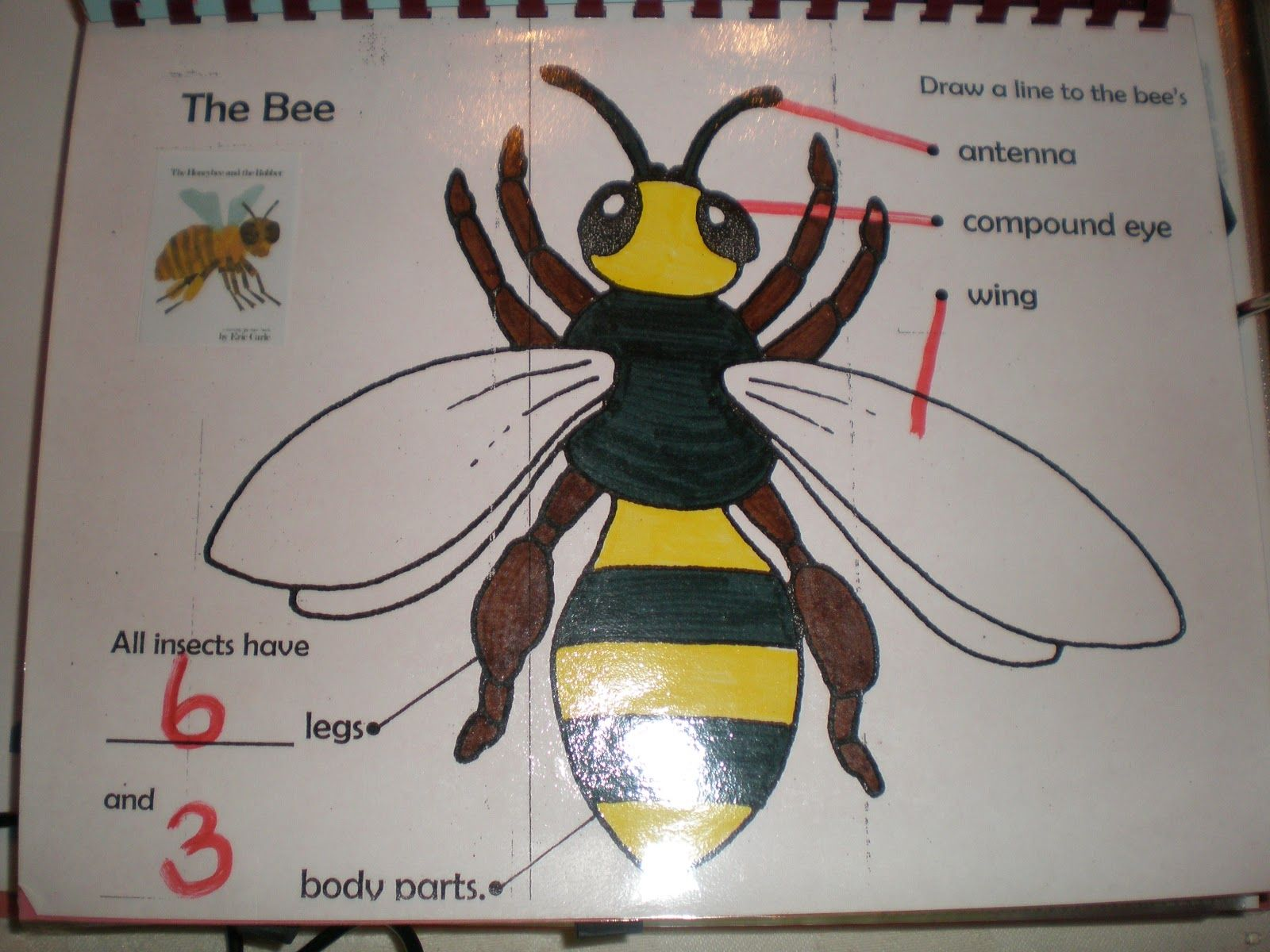 Labelled Diagram Of A Bee For Children