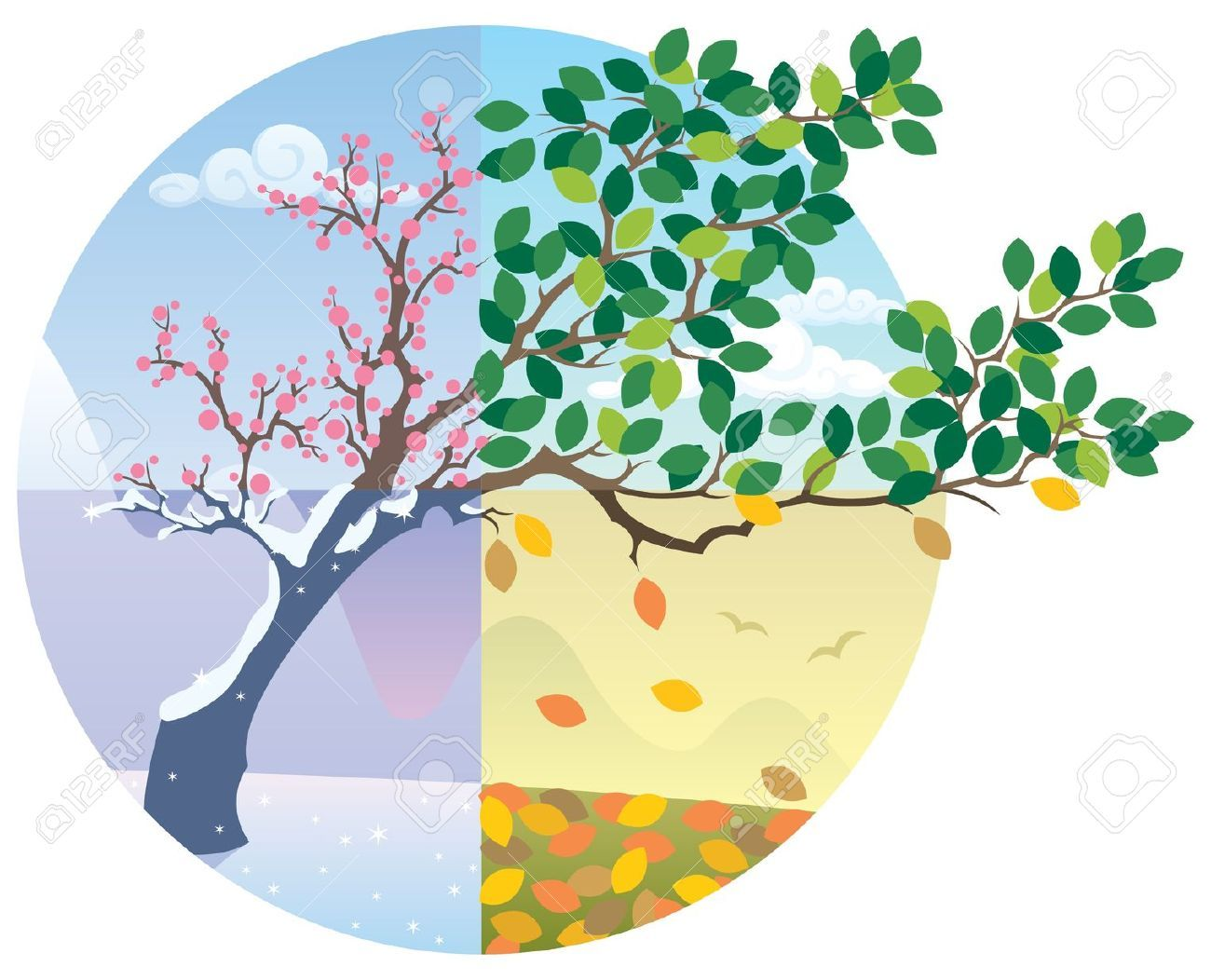 Cartoon Illustration Representing The Cycle Of The Four Seasons No Transparency Used