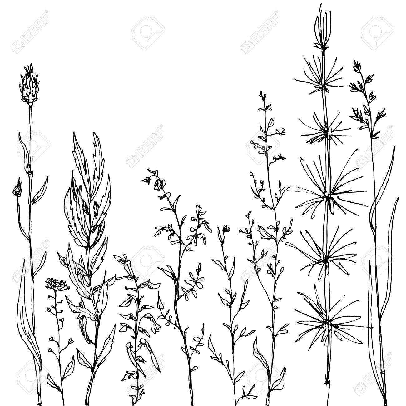 wild flower: floral composition with ink drawing herbs and