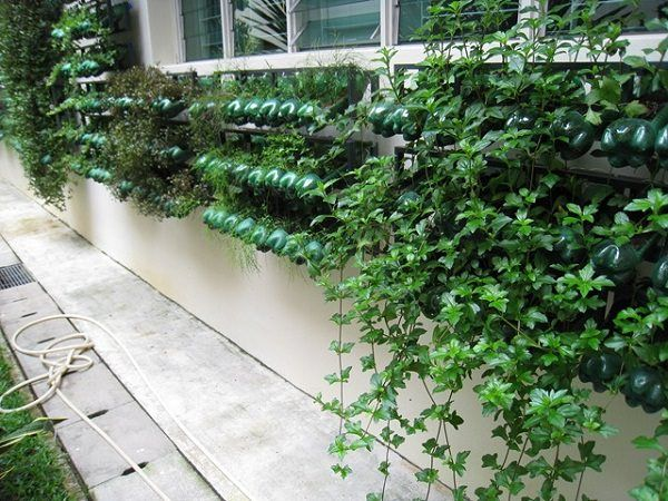 13 Plastic Bottle Vertical Garden Ideas Gardens Bottle Garden