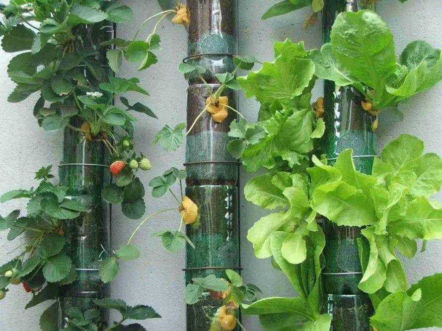 Diy Recycled Garden Art Herbs And Veges Pinterest Gardens