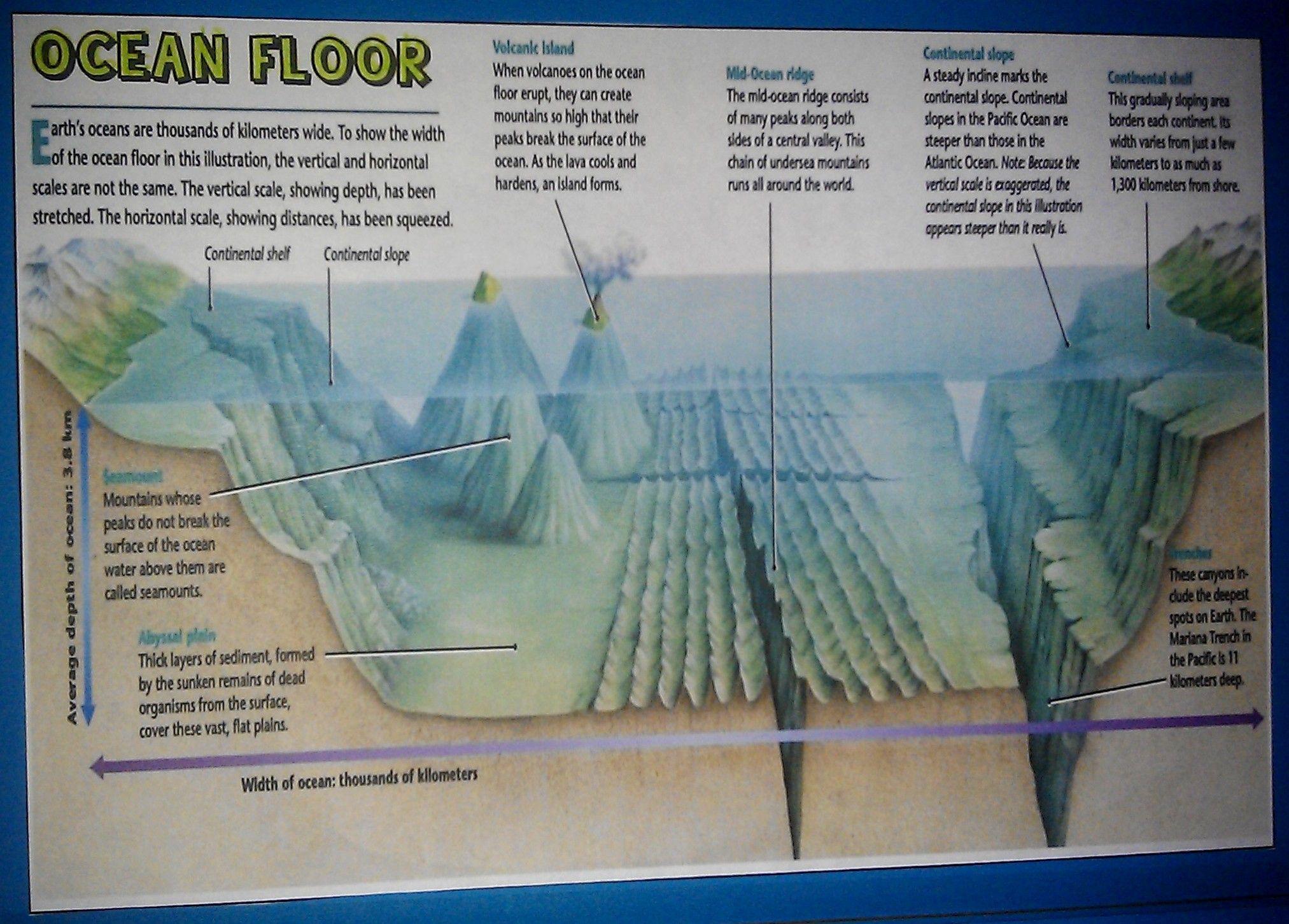 Features Of The Ocean Floor Worksheet Free Worksheets
