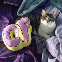 Odd future pillow | Want!!!! | Pinterest