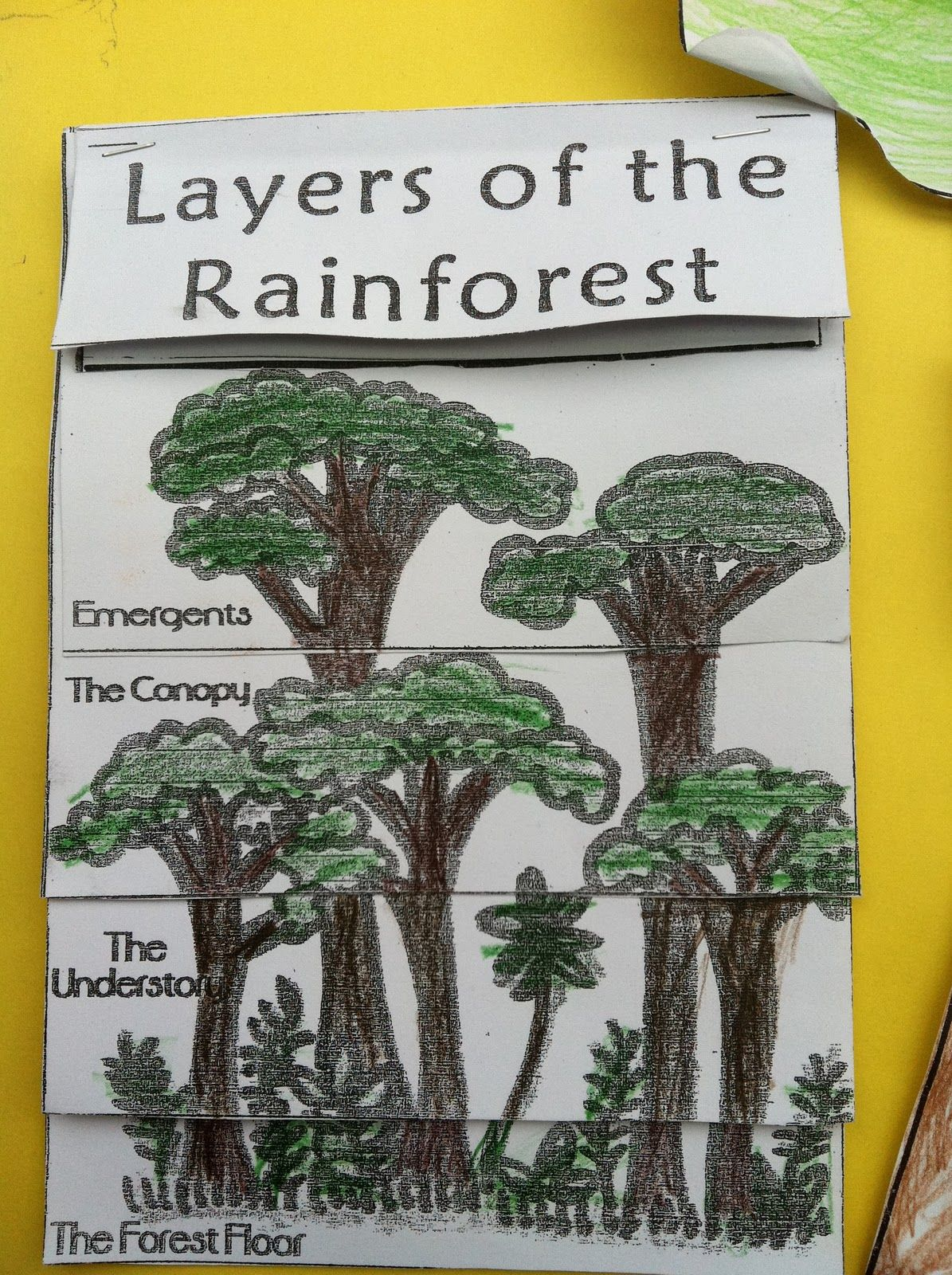 R Is For Rainforest The Great Kapok Tree Crafts