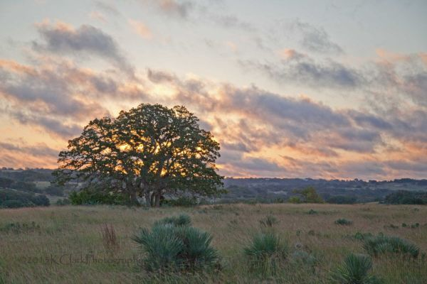 Sunrise Oak Western Fine Art Landscape Texas Hill Country Ancient Rustic Home