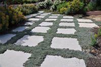 Silver Carpet Dymondia Margaretae - Carpet Vidalondon