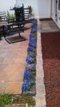 Patio borders, plants are lobelia. | Patio ideas ...