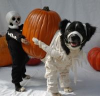 These 30 Halloween Dog Costumes Will Put A Smile On Your ...