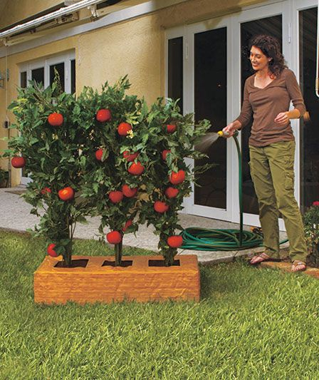 The Tomato Factory Or Giant Tomato Tree The Lakeside Collection