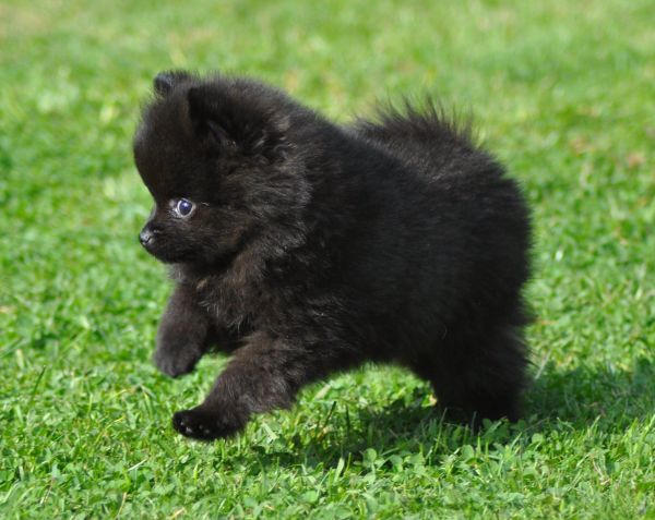 I love little black poms Is it because I have one! I