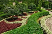 Trees And Shrubs For Landscaping | Small Ornamental Trees ...