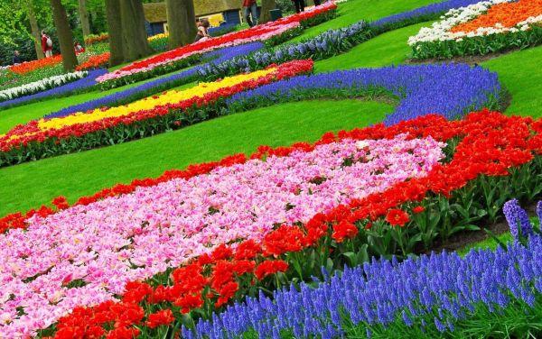 garden design fascinating colorful