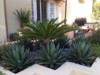 Newport Beach modern planter. Blue glow agave, sago palm ...