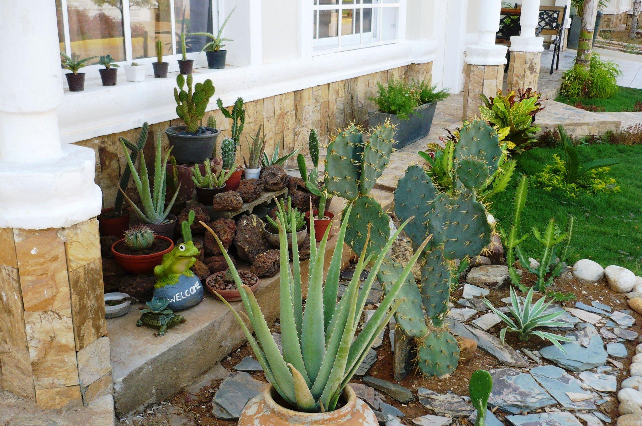 Mi jardin xerofilo  Deco para mi casa  Pinterest  Gardens