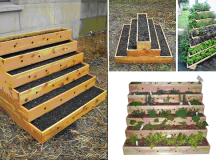 Strawberryplanters2.png Photo: This Photo was uploaded by ...