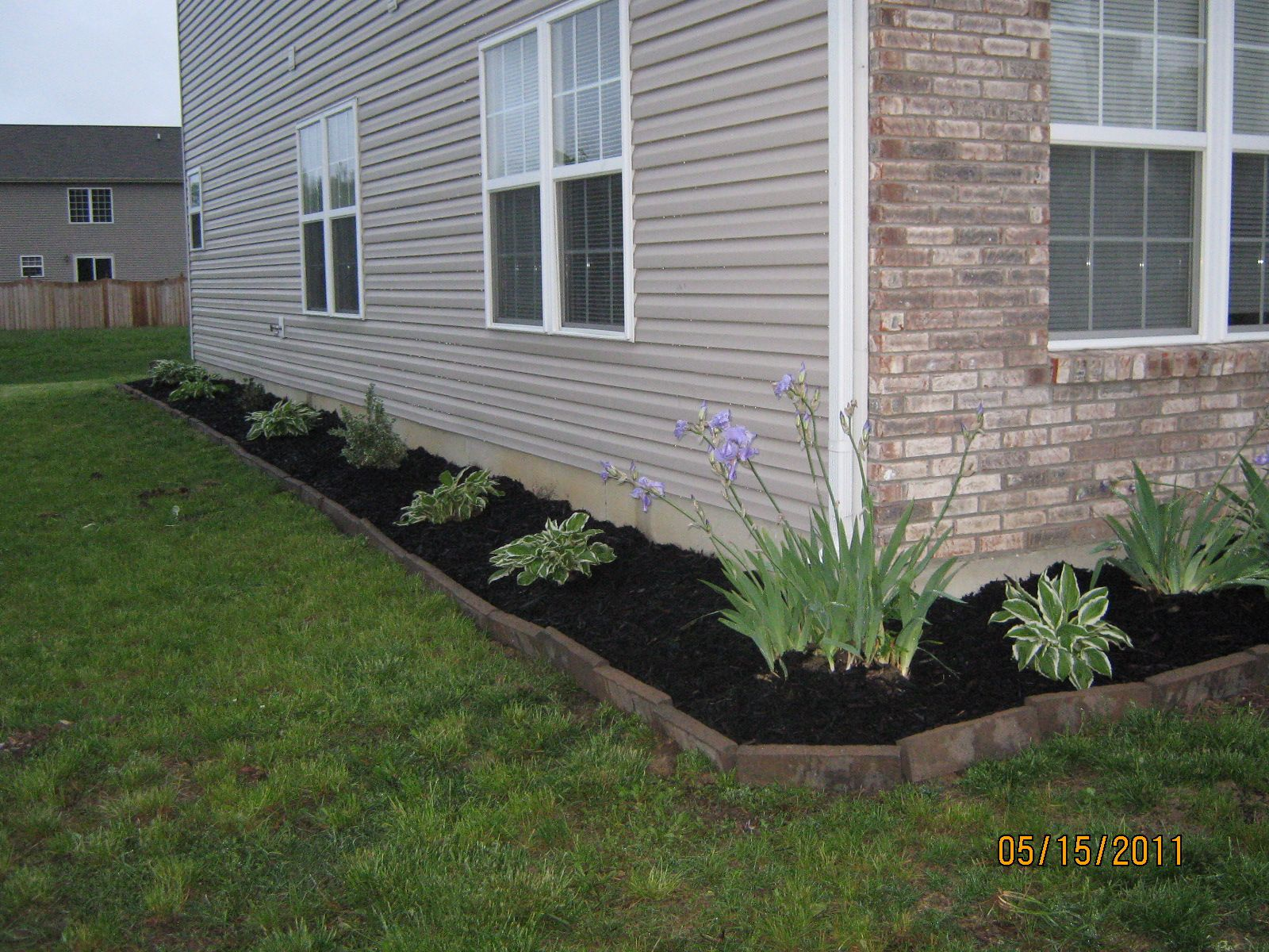 Black Mulch Along Sidewalk Google Search Landscaping