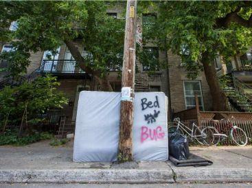 """Résultat de recherche d'images pour """"bed bug bed on the street"""""""