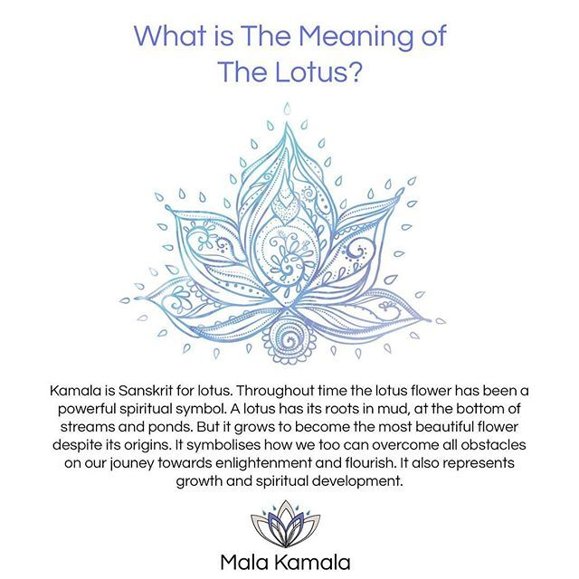 Unalome Lotus Tattoo Flower Meaning