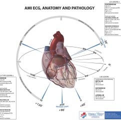 12 Lead Ekg Placement Diagram Usb To Rj45 Wiring I Am Looking At A Picture In My Book For The Of