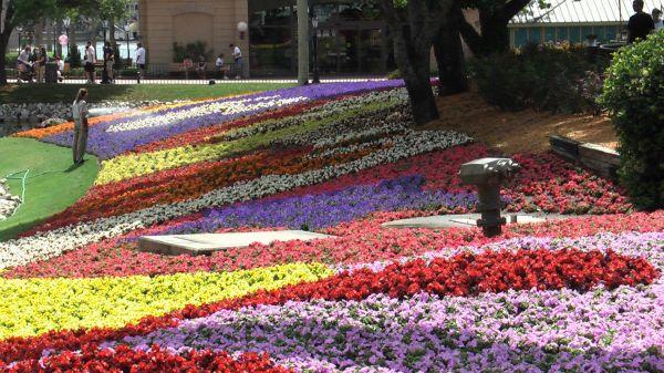 flowers gardens epcot landscapes