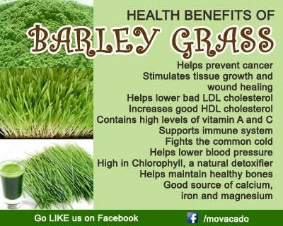 Health benefits of barley grass | Health tip | Pinterest ...