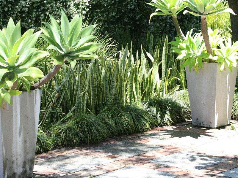 Perth House Garden Super Spaces Pinterest Gardens Agaves