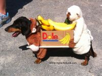 #Dachshund costume: Two Monkeys Carrying a Box of Bananas ...