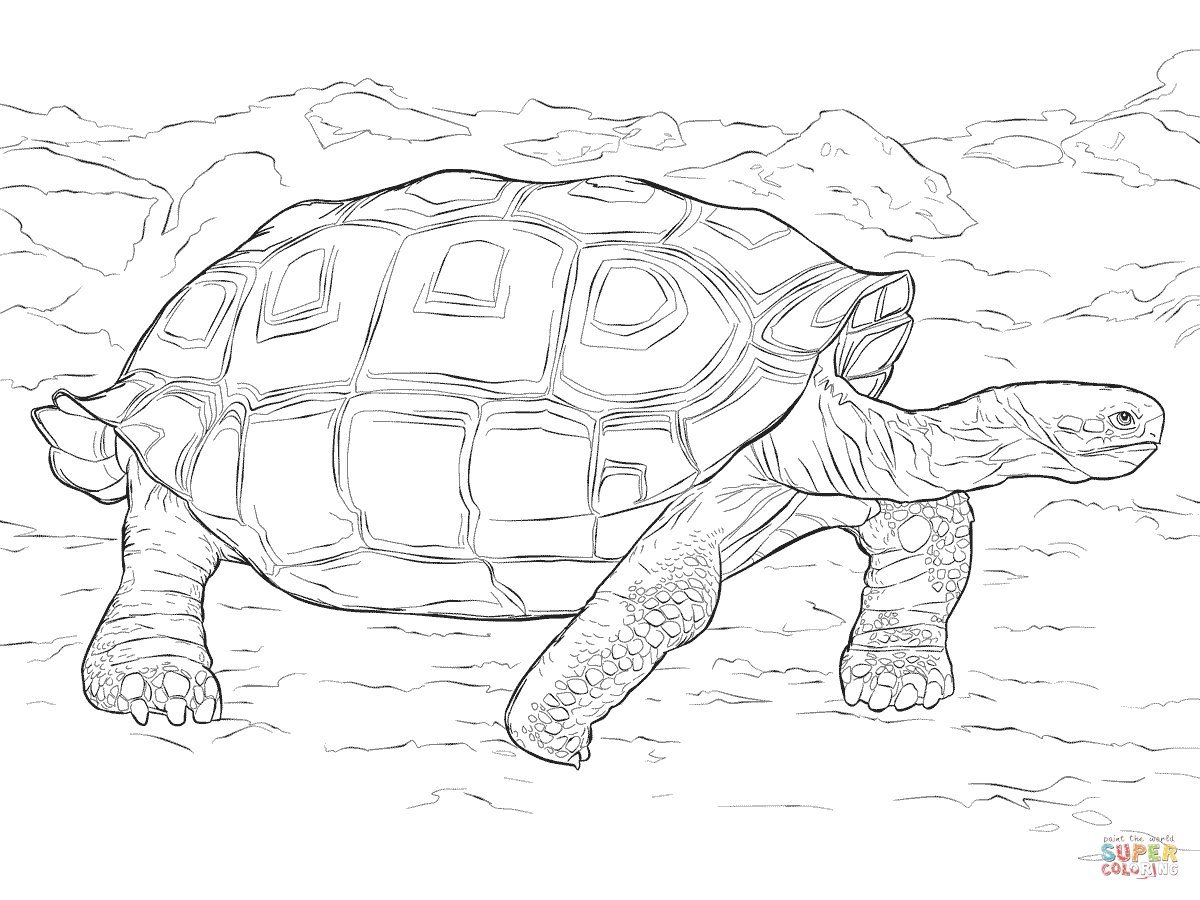 Realistic Galapagos Tortoise Coloring Page