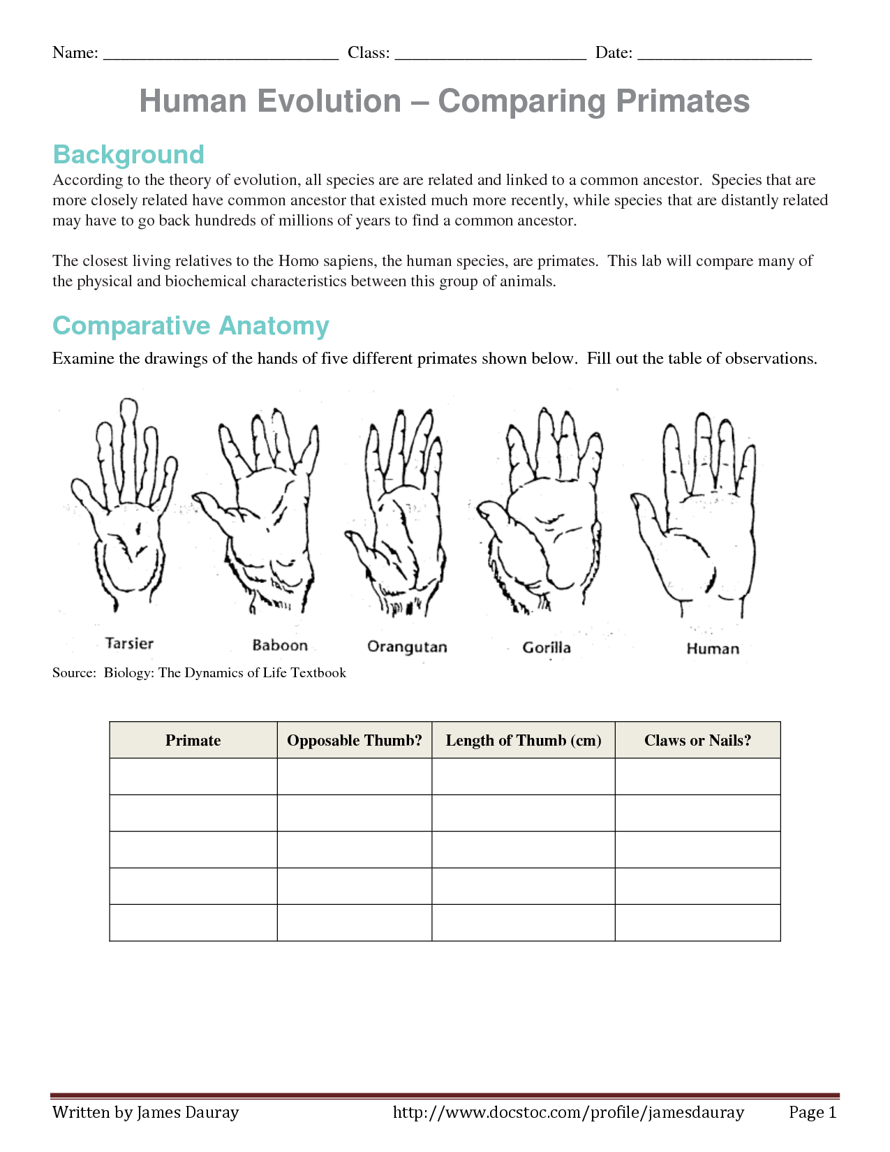 Worksheet Comparative Anatomy Worksheet Grass Fedjp