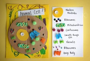 PBL models on Pinterest | Dna, Science and Models