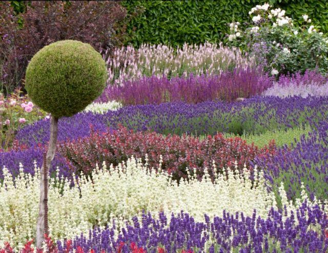 Lavendel Im Garten Gestaltung Ideen Kombinationen Farben Garten
