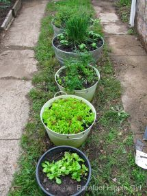 Barefoot Hippie Girl Spring Projects-herbs Vegetables