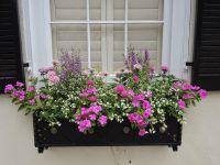 full sun window box low water drought tolerant vinca ...