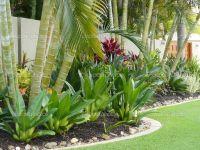 Tropical Patio Plants RED | Tropical Garden Border Stock ...