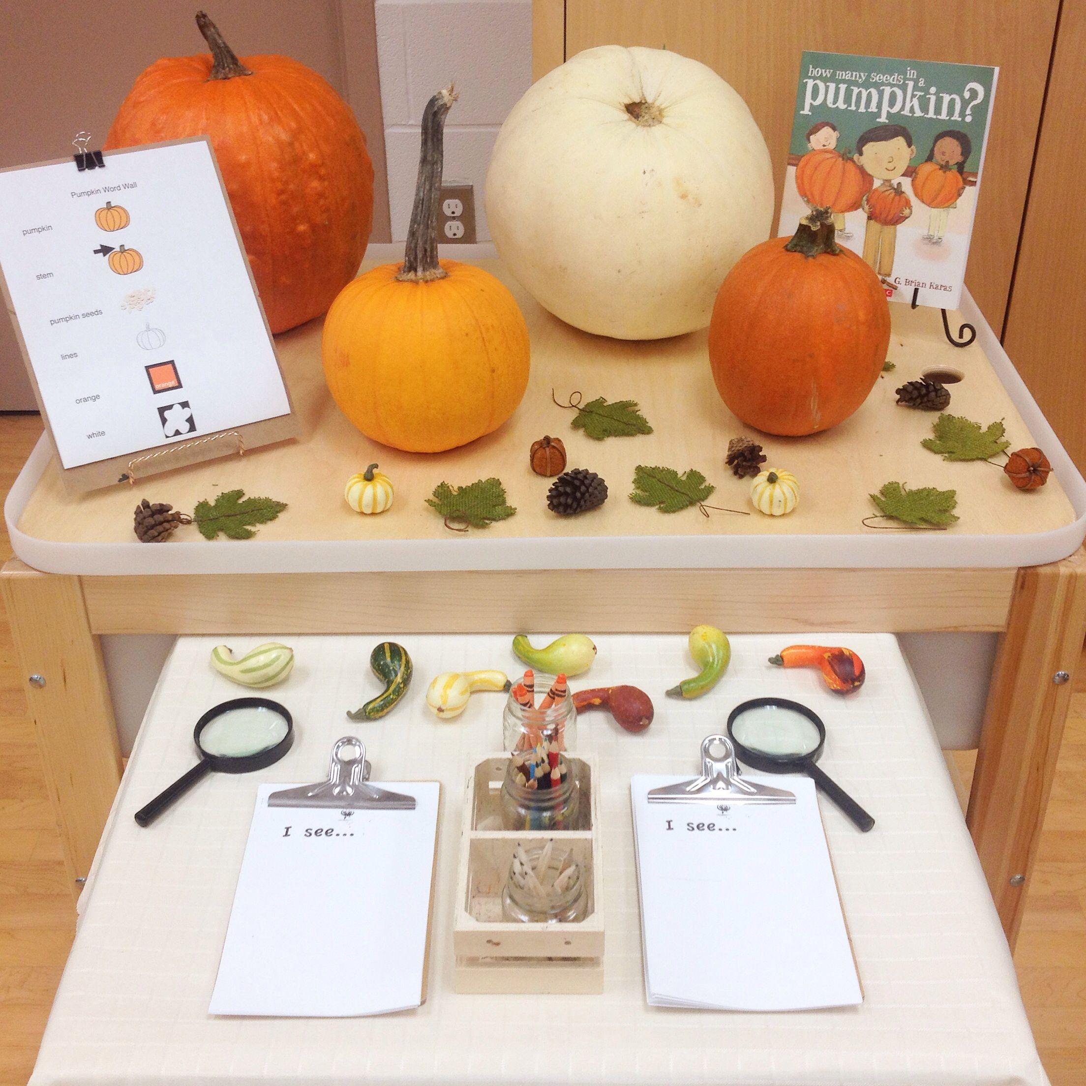 Pumpkin Provocation