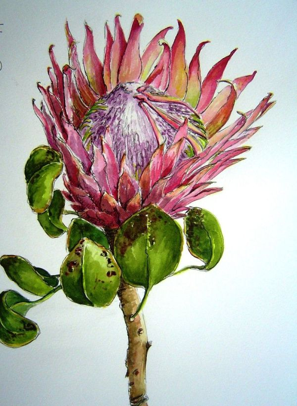 South African Watercolour Artists - Google Art Flowers Watercolor