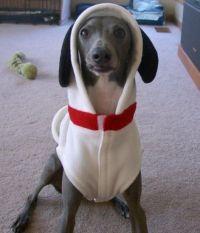 snoopy dog costume Er-mer-frackin-gerd!!!!!!!! | Puppies ...