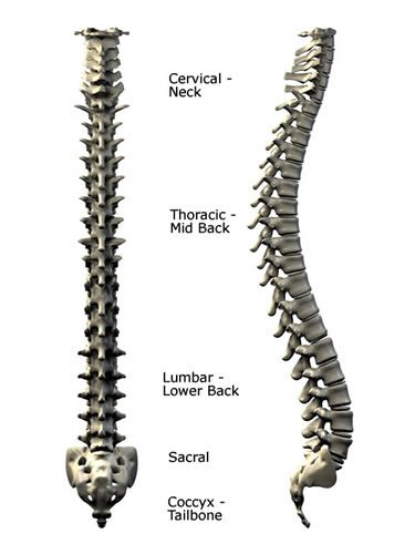 Lumbar Diagram