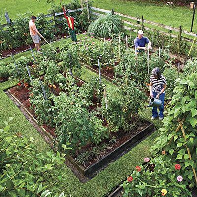 Raise Your Own Veggies Gardens Vegetables And Veggie Gardens