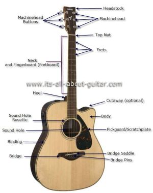 Diagram of an Acoustic Guitar | Instruments | Pinterest