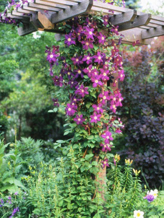 The Best Perennial Vines For Your Garden  Gardens, Spring