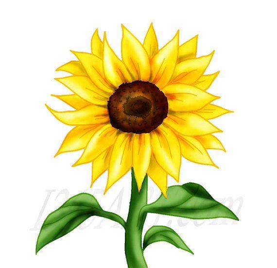 beautiful golden yellow sunflower