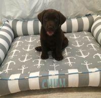 Custom Dog Bed for Labrador Puppy. Hand Made by J'Adore ...