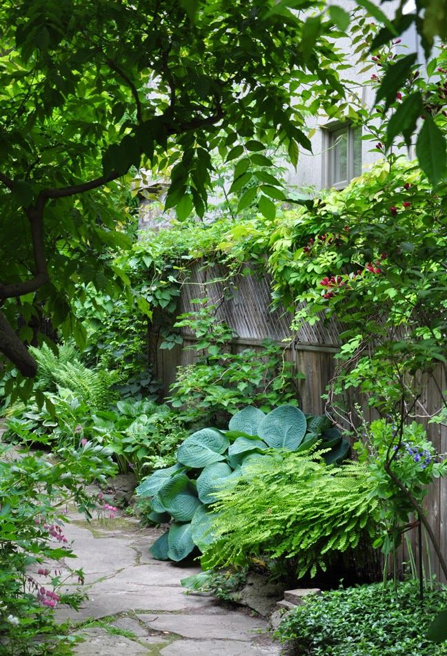 Gardening Ideas For The Narrow Garden Between Suburban Homes