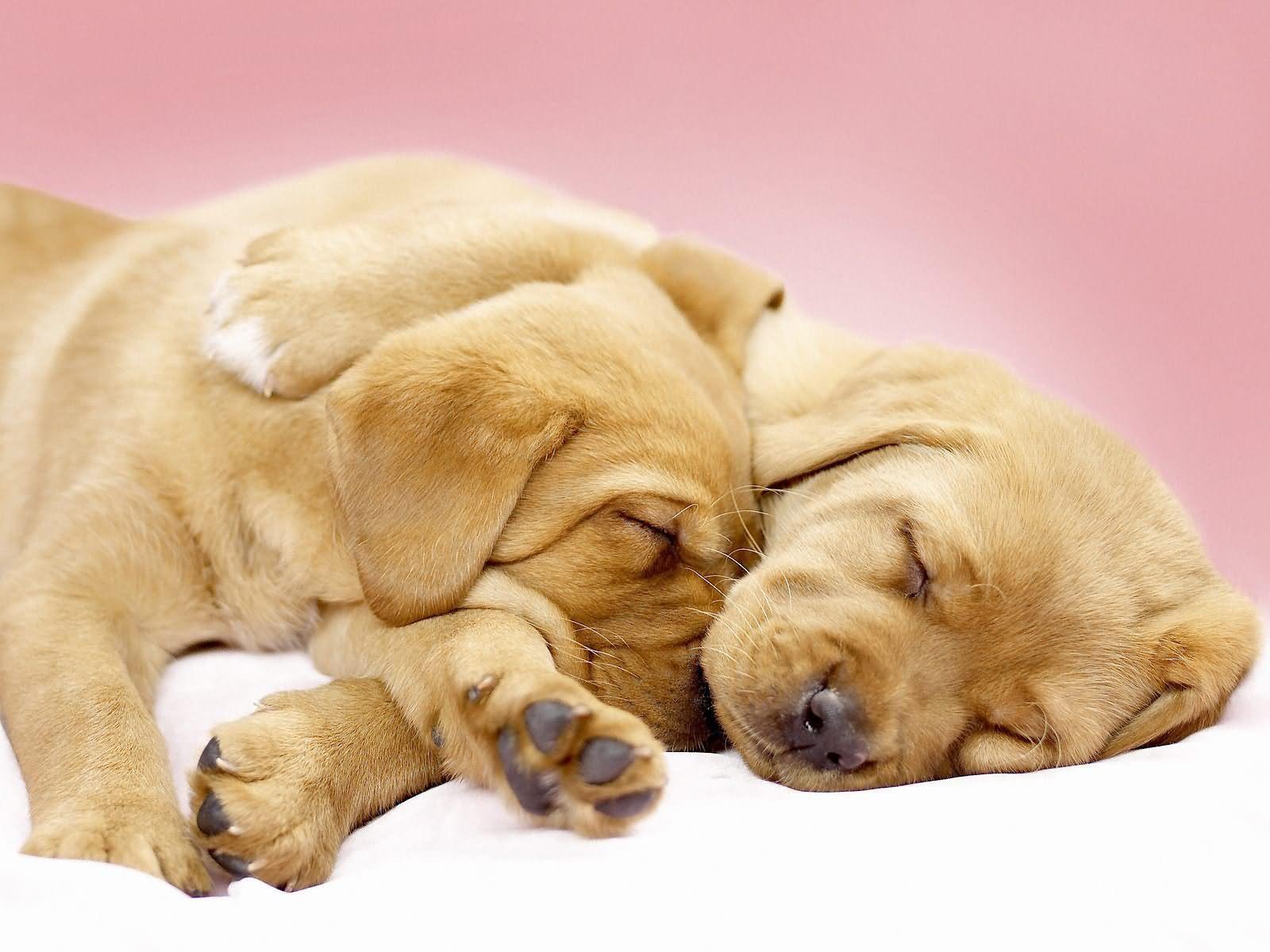 free hd dog wallpapers | hd wallpapers | pinterest | sleeping baby