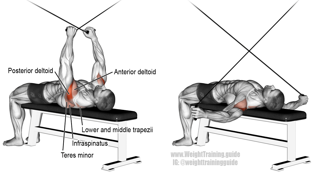 Supine cable reverse fly. An isolation pull exercise